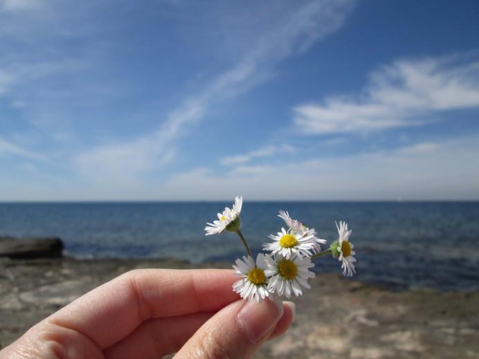 Flowers in Umag